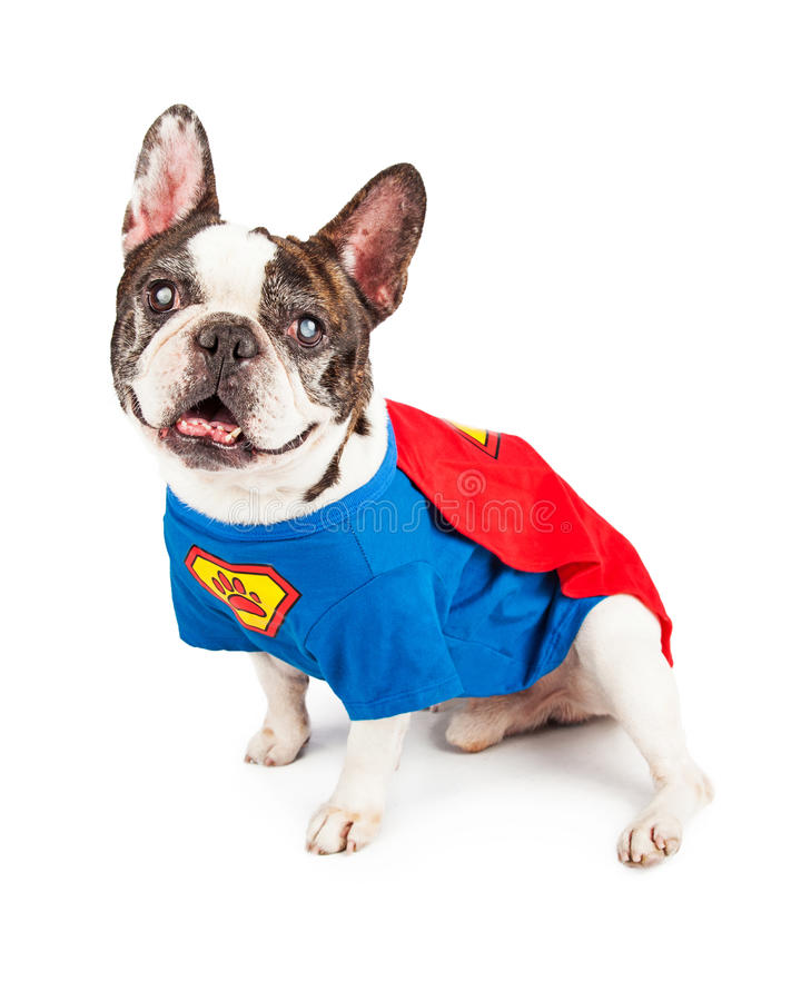 Francuskiego buldoga pies w Super bohatera kostiumu obrazy royalty free
