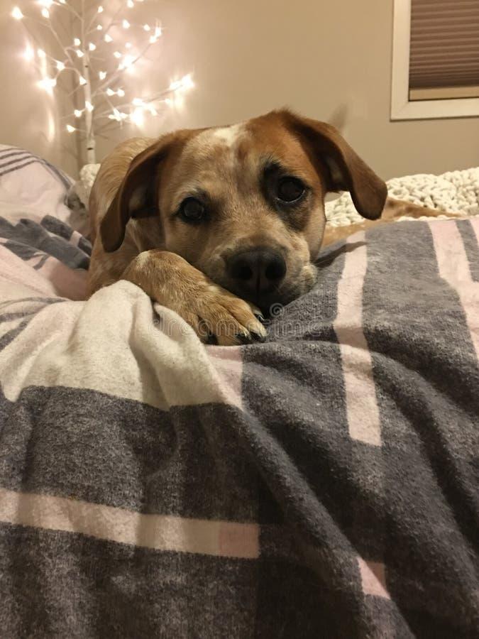 Franela del perro de perrito fotos de archivo
