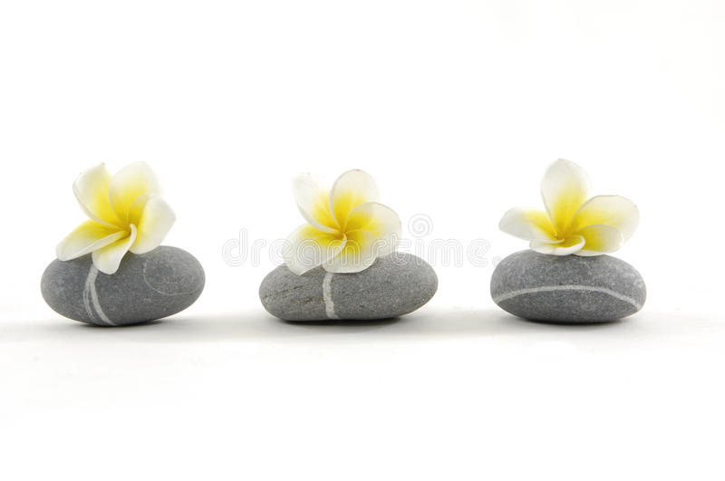 Frangiapani and stones stock images