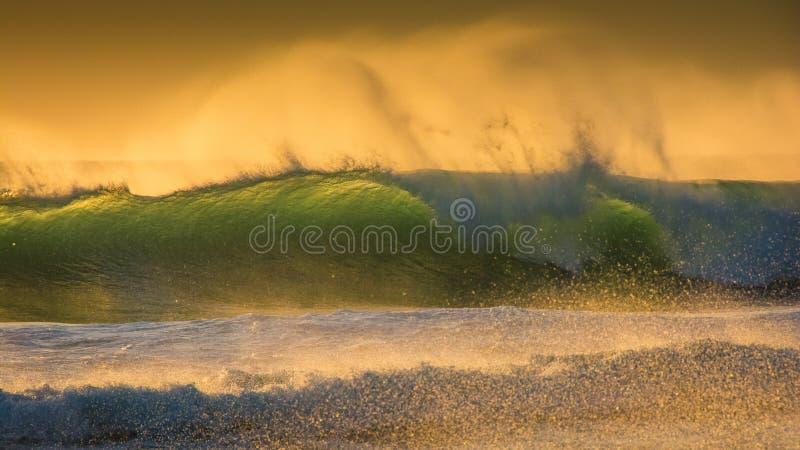 Frangiflutti di un verde blu su una sera ventosa di tramonto fotografie stock