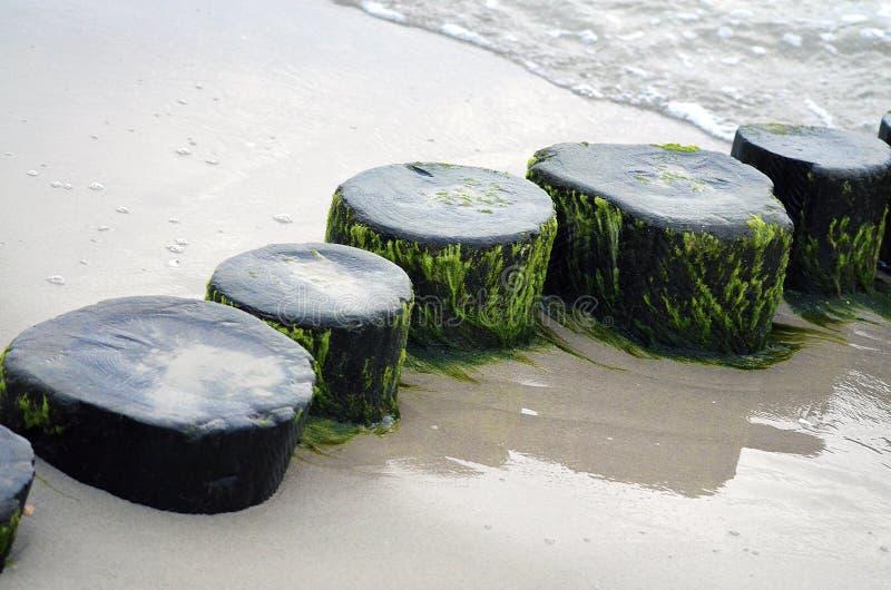 Frangiflutti nel Mar Baltico fotografia stock libera da diritti