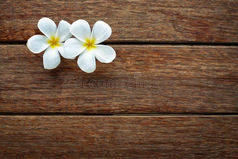 Frangipane bianco su fondo di legno fotografia stock
