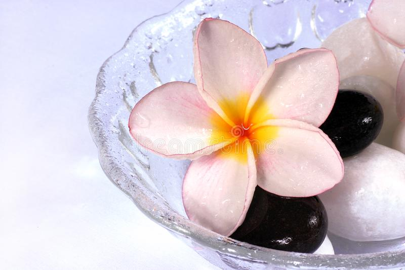 Frangipane flowers and pebbles in a glass bowl stock images