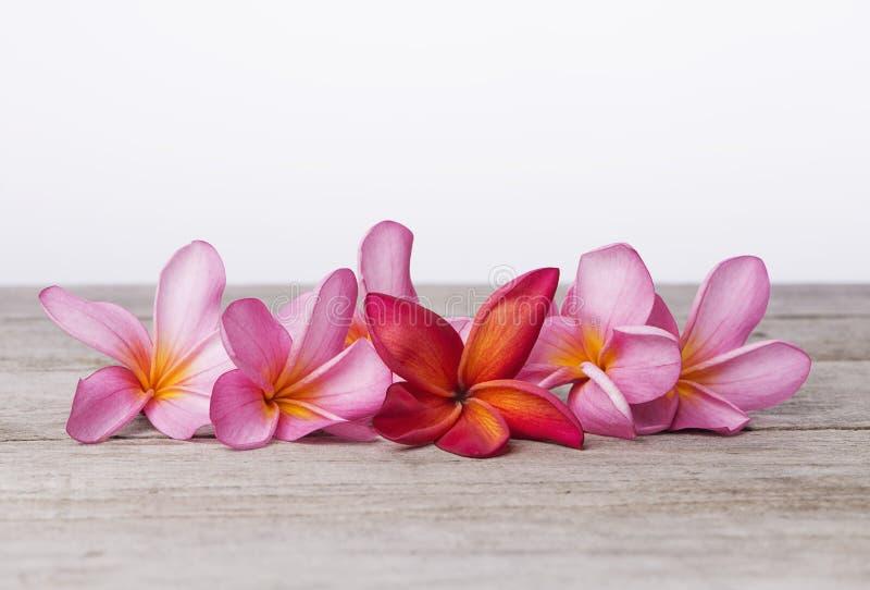 Frangipani ή λουλούδι Plumeria στο ξύλινο υπόβαθρο Έννοια SPA στοκ φωτογραφία