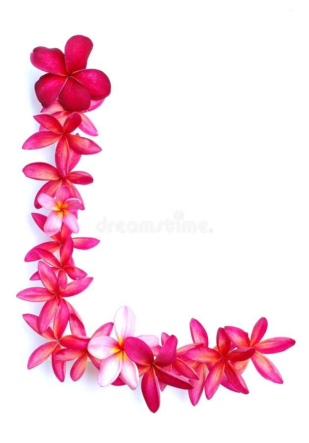 frangipani граници стоковое фото