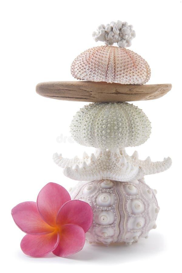 frangipani пляжа возражает пинк стоковые фотографии rf