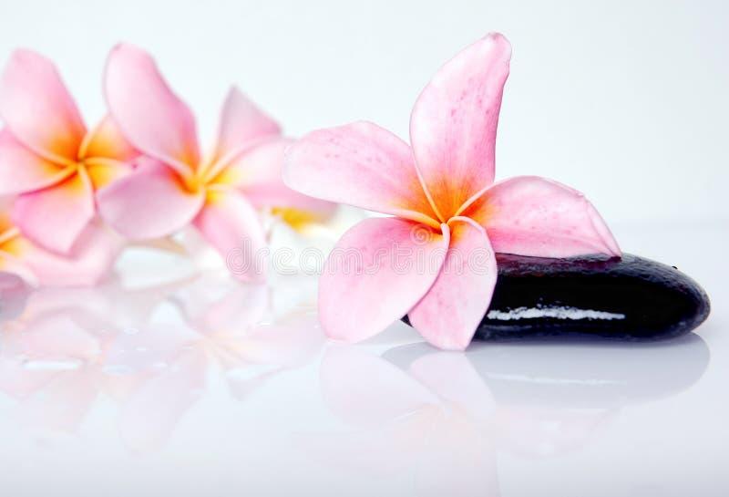 frangipani zdjęcia royalty free