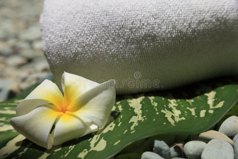 Download Frangipani Stock Images - Image: 21722514