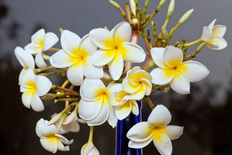 Download Frangipani στοκ εικόνα. εικόνα από άσπρος, vase, ανθοδεσμών - 22797285