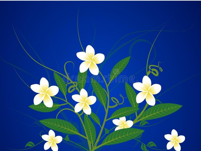 frangipani stock illustrationer