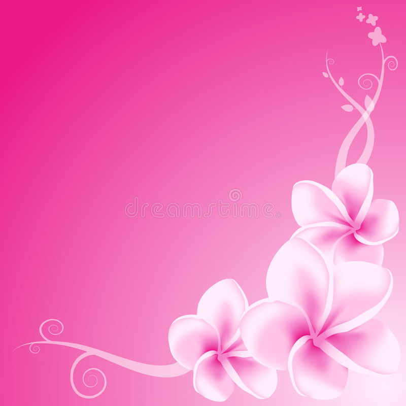 Pink Frangipani Flowers royalty free illustration