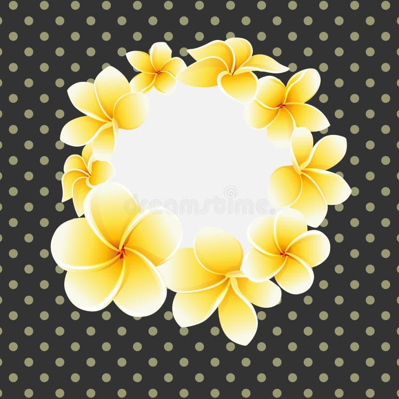 Frangipani del vector o flor de oro del plumeria en la postal del fondo del lunar fotos de archivo libres de regalías