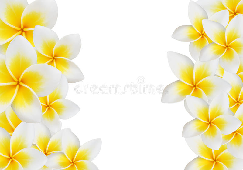 Download Frangipani design collage. stock image. Image of plant - 26514191