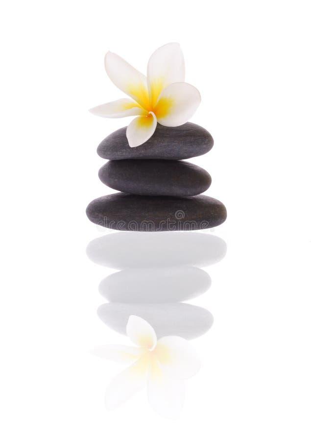 Frangipani em pedras imagem de stock royalty free