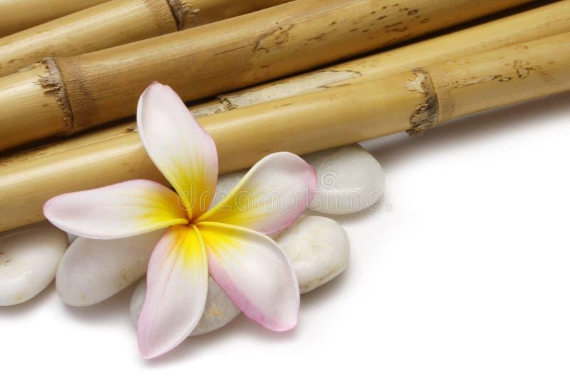 Frangipani en Bamboe royalty-vrije stock afbeelding