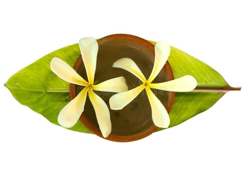 Frangipani en un tazón de fuente en una hoja fresca del plátano imágenes de archivo libres de regalías