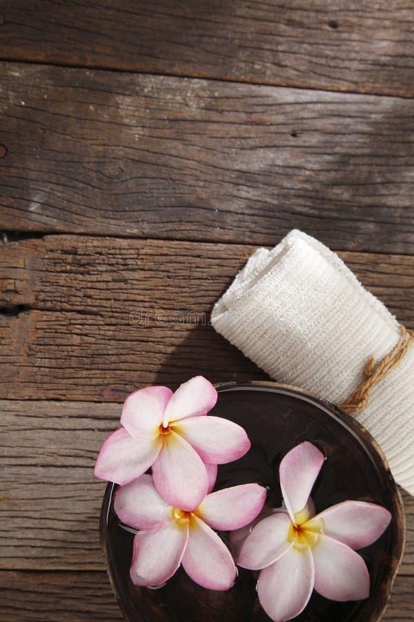 Frangipani flower royalty free stock images