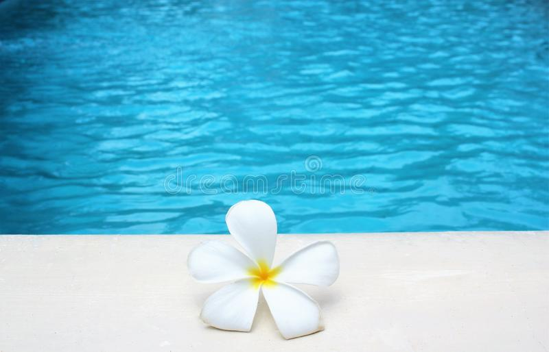 Frangipani flower tropical poolside background with copy space stock photo photograph image picture. Ripple royalty free stock images
