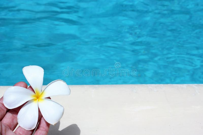 Frangipani flower tropical poolside background with copy space stock photo photograph image picture. Ripple hand stock photos