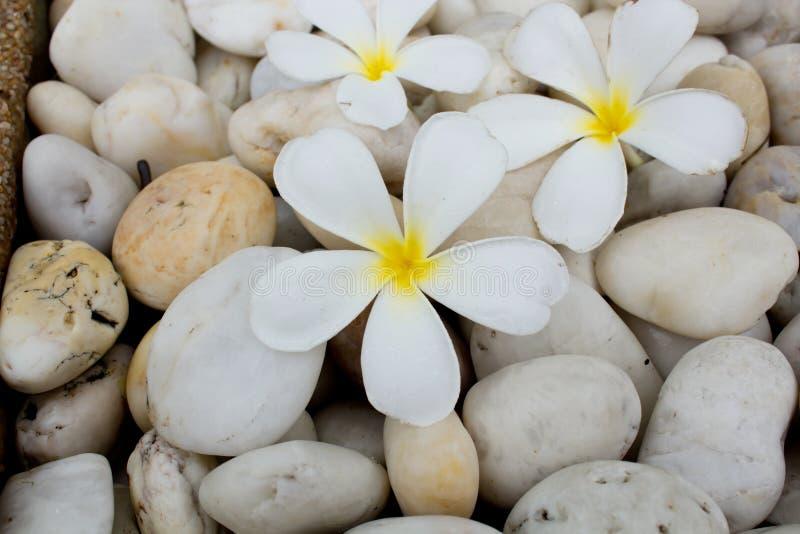 Frangipani flowers on stone stock photo