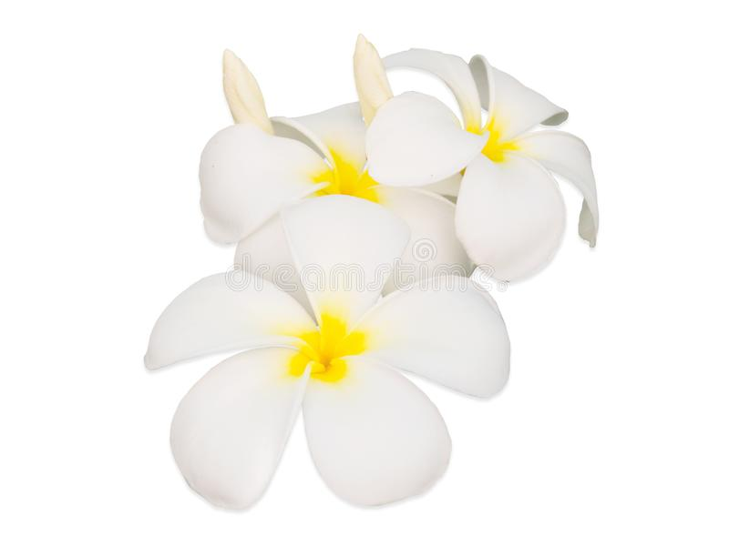 Frangipani Flower or Plumeria Isolated on White Background royalty free stock photography