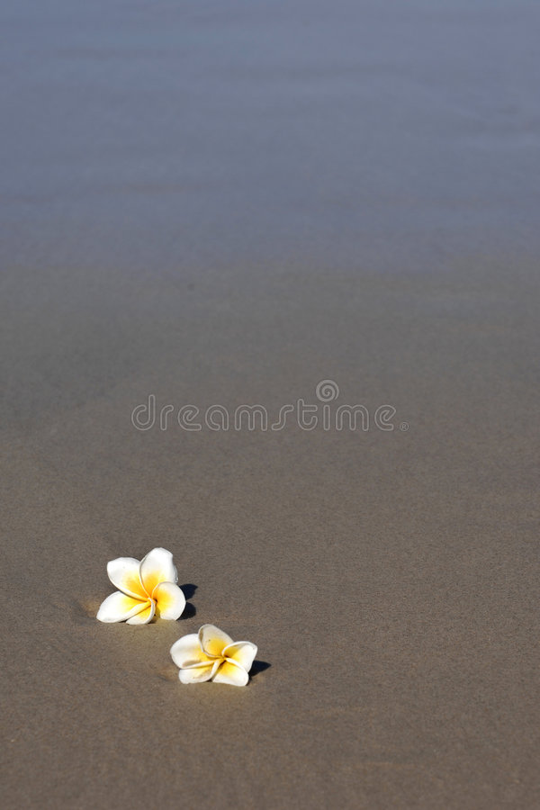 Frangipani ocean 03 royalty free stock photography