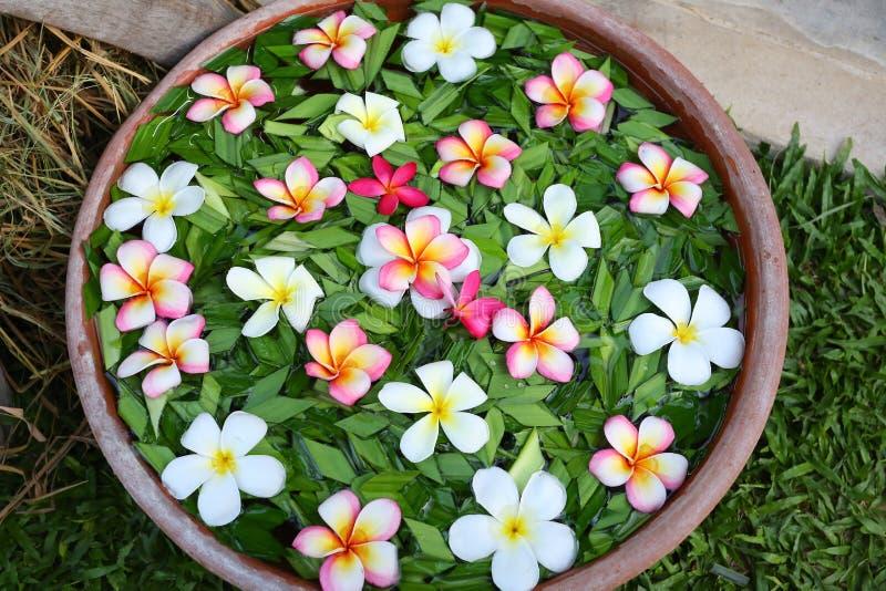 Frangipani- oder Plumeriablumen in der Schüssel mit Wasser Badekurortkonzept lizenzfreie stockfotos