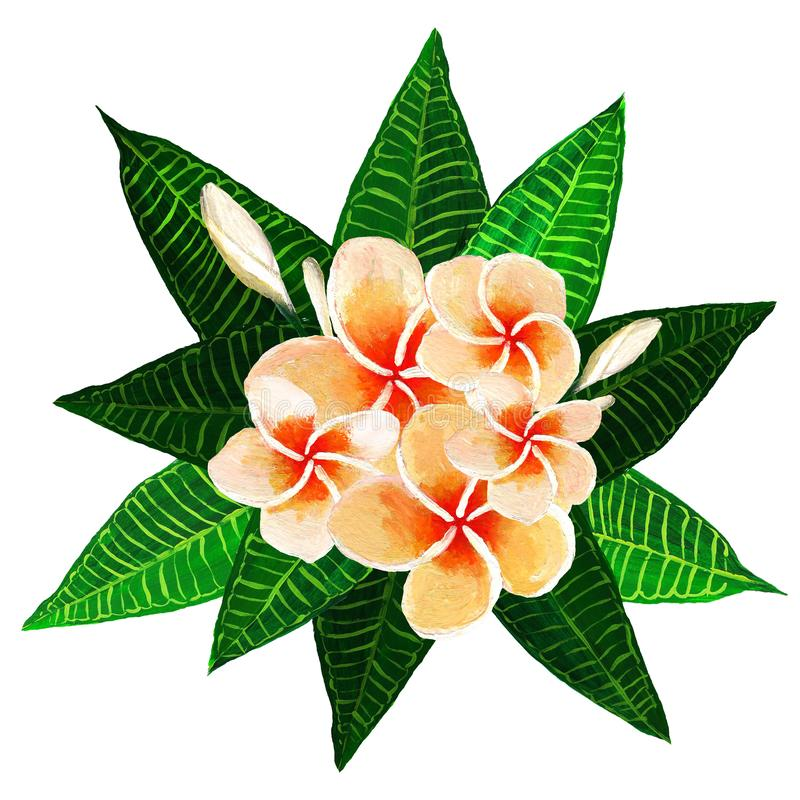 Frangipani plumeria flowers with leaves. vector illustration