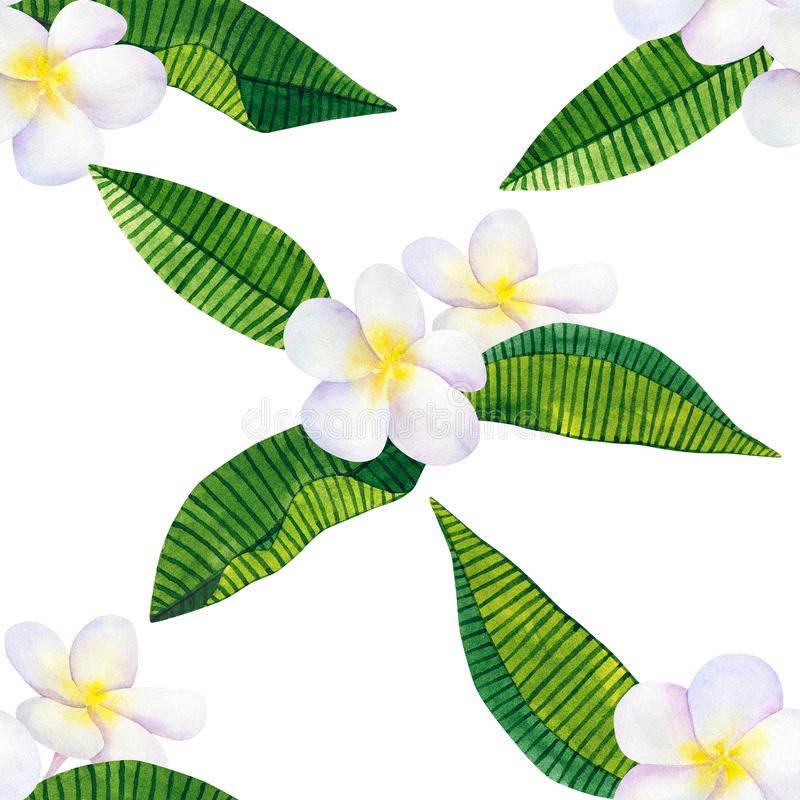 Frangipani or plumeria. White flowers and green tropical leaves. Hand drawn watercolor illustration. Seamless pattern. Isolated on royalty free illustration
