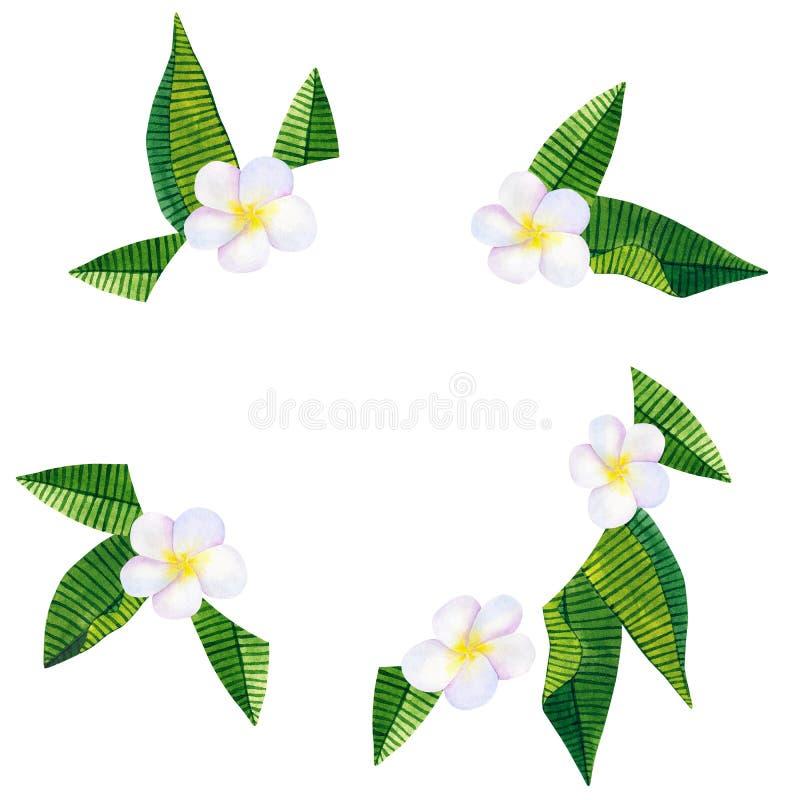 Frangipani of plumeria Witte bloemen en groene tropische bladeren Rond kader of malplaatje Hand getrokken waterverfillustratie stock illustratie