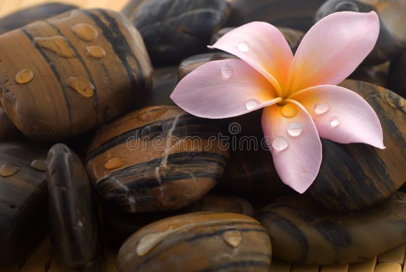 Frangipani and polished stone royalty free stock image