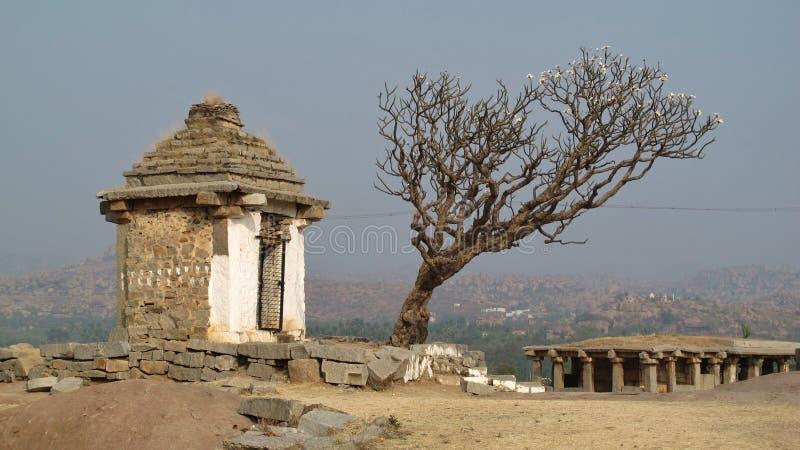 Frangipani ruiny w Hampi i drzewo, India zdjęcie royalty free
