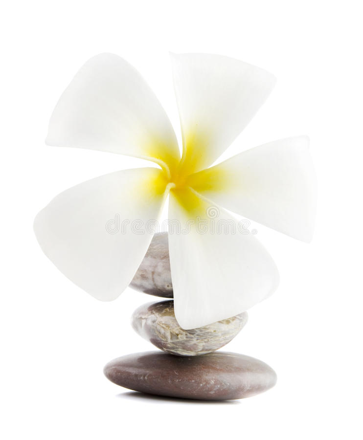 Frangipani sulle pietre di terapia immagine stock