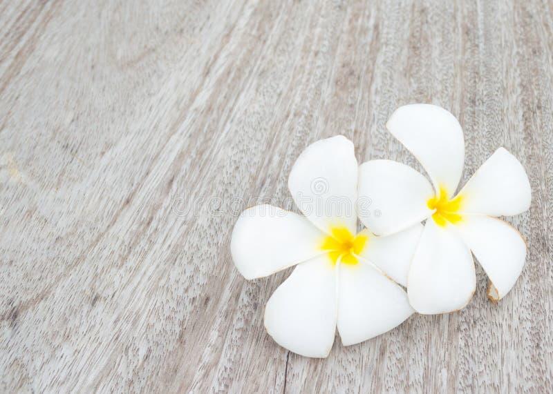 Frangipani tropical das flores fotos de stock