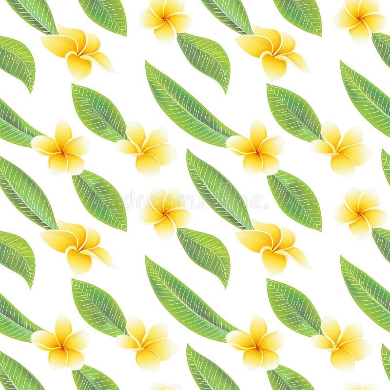 Frangipani tropical ex?tico del hibisco de las flores y modelo incons?til de las hojas verdes fotos de archivo libres de regalías