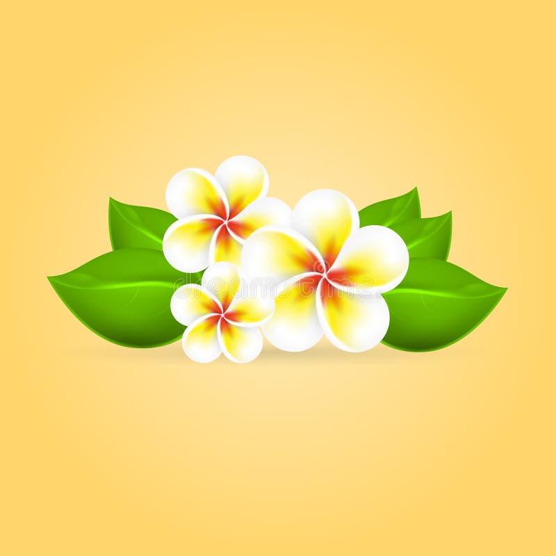 Frangipani tropikalny kwiat royalty ilustracja