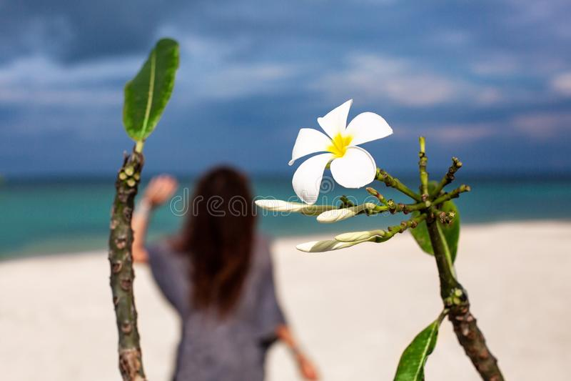 Frangipanibloem en jonge vrouw op het strand stock afbeeldingen