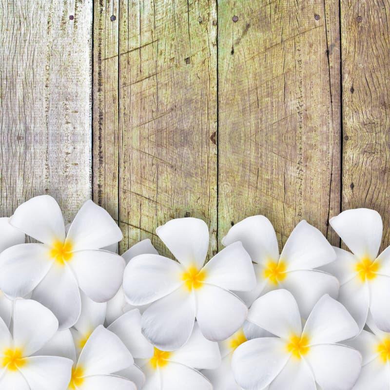 Frangipanibloem op houten vloer royalty-vrije stock fotografie