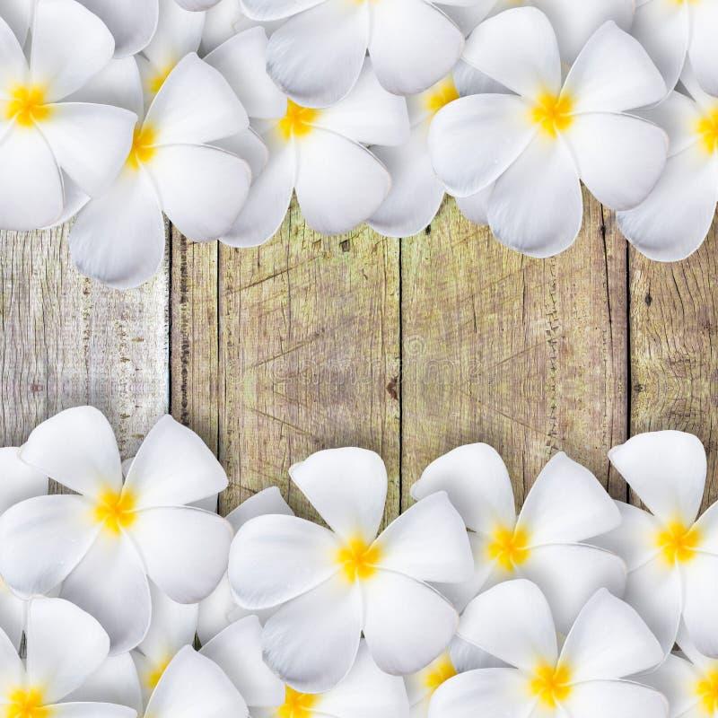 Frangipanibloem op houten vloer royalty-vrije stock afbeelding