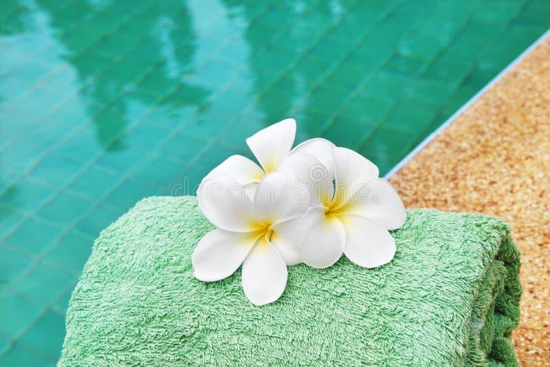 Frangipaniblumen am Poolside lizenzfreie stockfotos