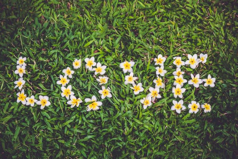 Frangipaniblumenanordnung als die Wortliebe auf dem grünen Gras lizenzfreie stockbilder