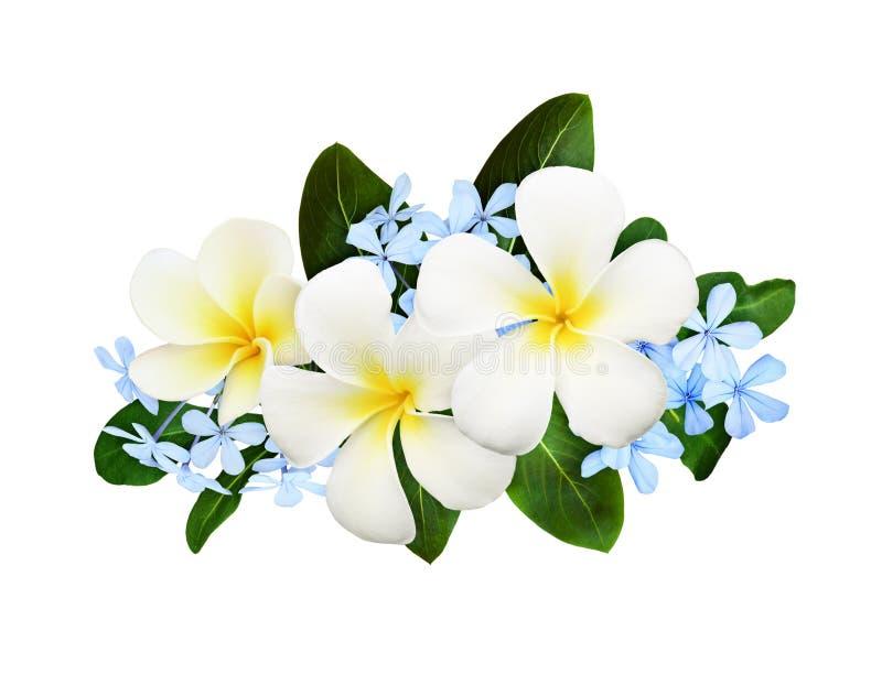 Frangipanies plumeria en tropische blauwe bloemen met groene bladeren in een florale regeling stock foto