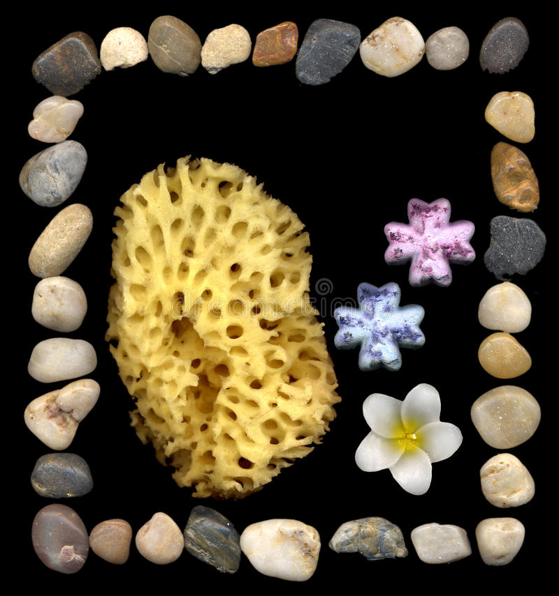 frangipanipeebles royaltyfri foto