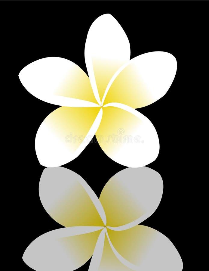 frangipaniplumeria vektor illustrationer