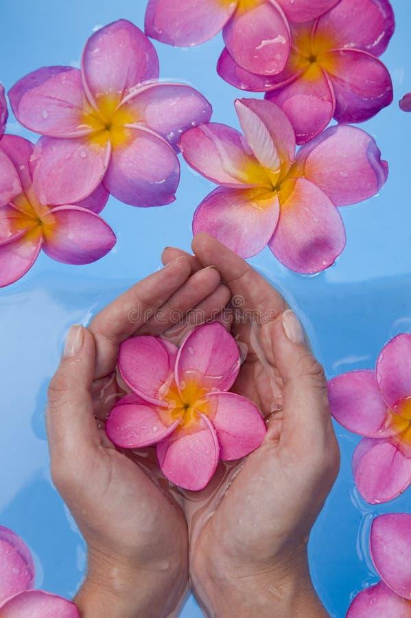 frangipanis ręk basenu zdrój fotografia royalty free