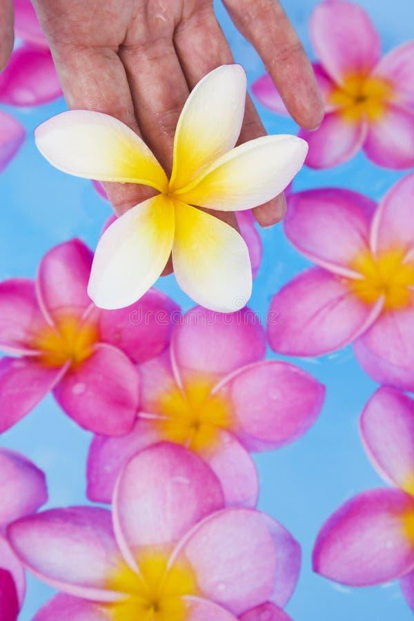 frangipanis ręk basenu zdrój zdjęcia royalty free