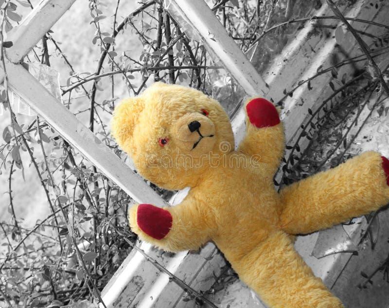 Frank l'ours photos libres de droits