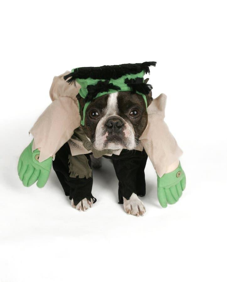 Frankendog imagen de archivo libre de regalías