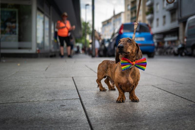 Frankfurt, Duitsland - Juli 20, 2019: Een hond in Christopher Street Day in Frankfurt stock afbeeldingen
