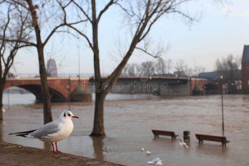 Frankfurt am Main Flood royalty free stock image